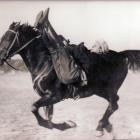 Een typische kozakken-excercitie te paard